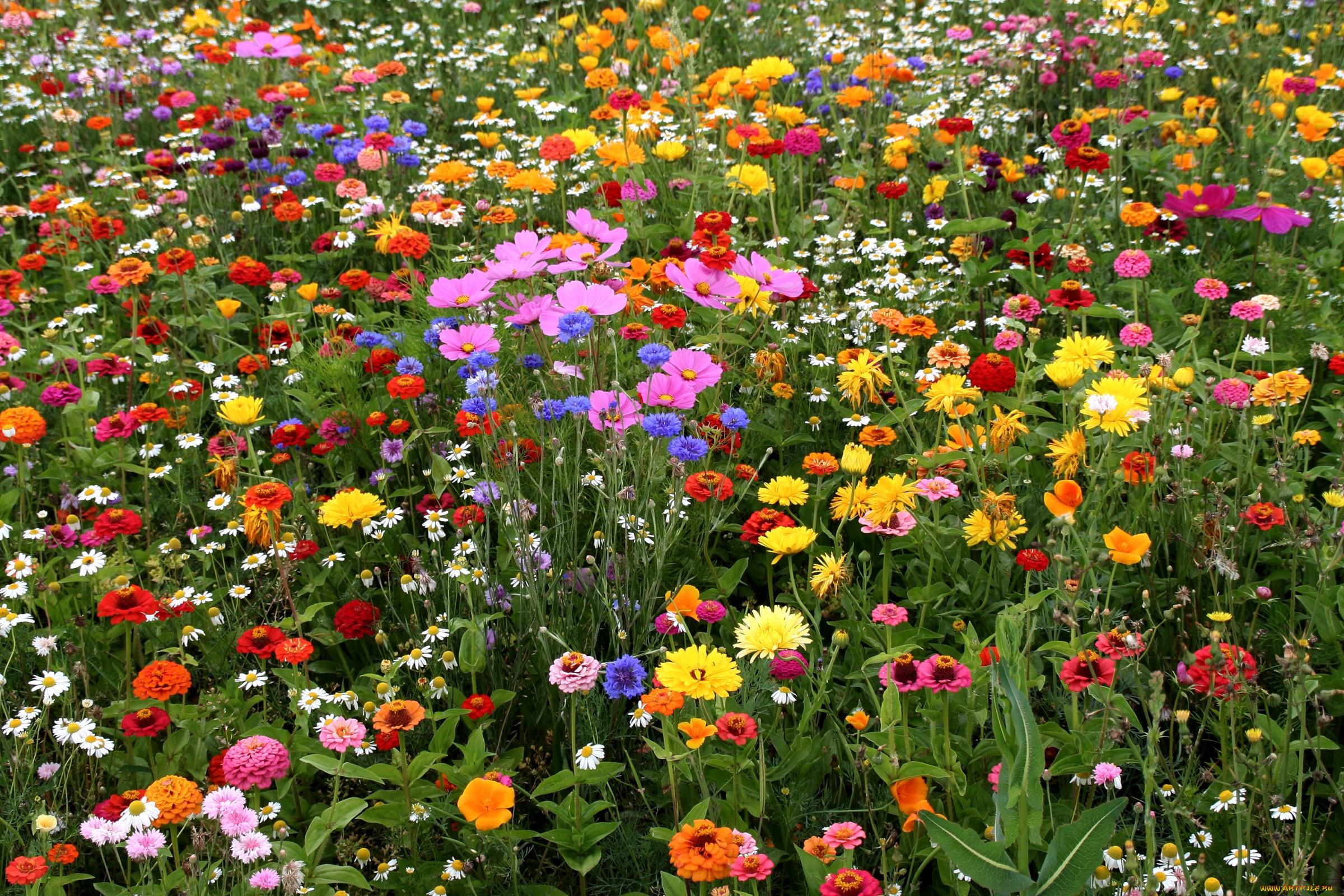 Цветы деревьев картинки и названия растения содержат